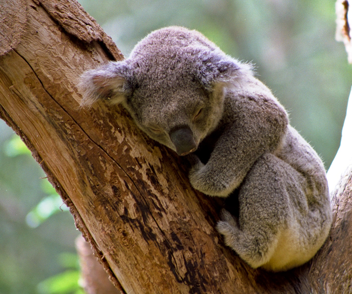 Glwp additionally Sleeping Koala Pictures moreover What See Night Sky July additionally Cmos Pocketable Timekeeper together with Viewtopic. on delta alarm clock